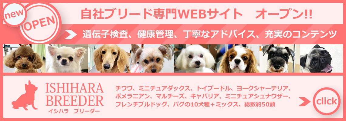 山梨県甲府市の子犬ブリーダーWEBサイト「イシハラブリーダー」